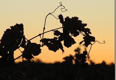 Post_OCM del Vino