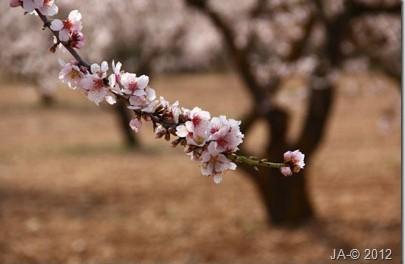 La Primavera pinta en Marzo_ 2012_Vestidos de Novia para los Almendros