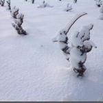 La Primera Nevada del 2013_28_feb