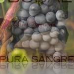 Bobal_Pura Sangre!_Julio 2014